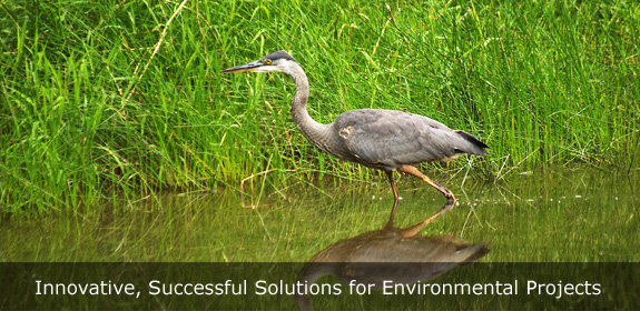 environmental projects, environmental consultants, wetland consultants, wetland delineation, wetland scientist