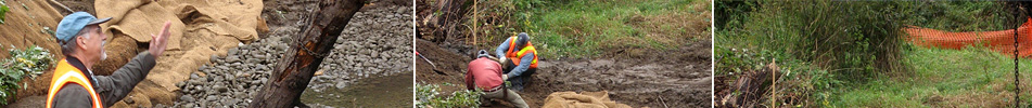 Pacific Habitat Services, Portland, Oregon, environmental consultants, wetland delineation, environmental construction, bioengineering, streambank stabilization, wetland enhancement