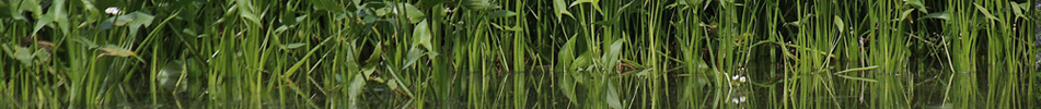 Pacific Habitat Services, Portland, Oregon, Wetlands, delineation, functional assessment, permitting, mitigation design, construction supervision, planting, monitoring, wetland inventories, mitigation banking, hydrology modeling